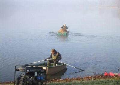 Off site Harvesting for various carp for sale
