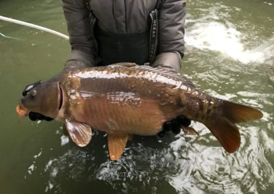 A Large Carp sold in 2017