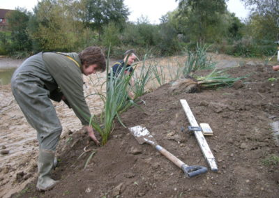 Planting of some Reeds at Hawkhurst Fish Farm